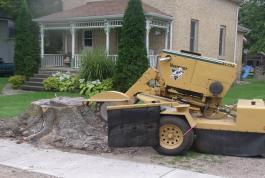 If you need a stump grinder, we have a heavy duty machine available.