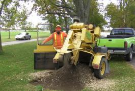Stump grinding is the last step.