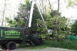 For tree trimming or removal, we have the equipment to get to high places.