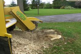 We like to grind a stump down below the surface, so you can reseed the lawn.